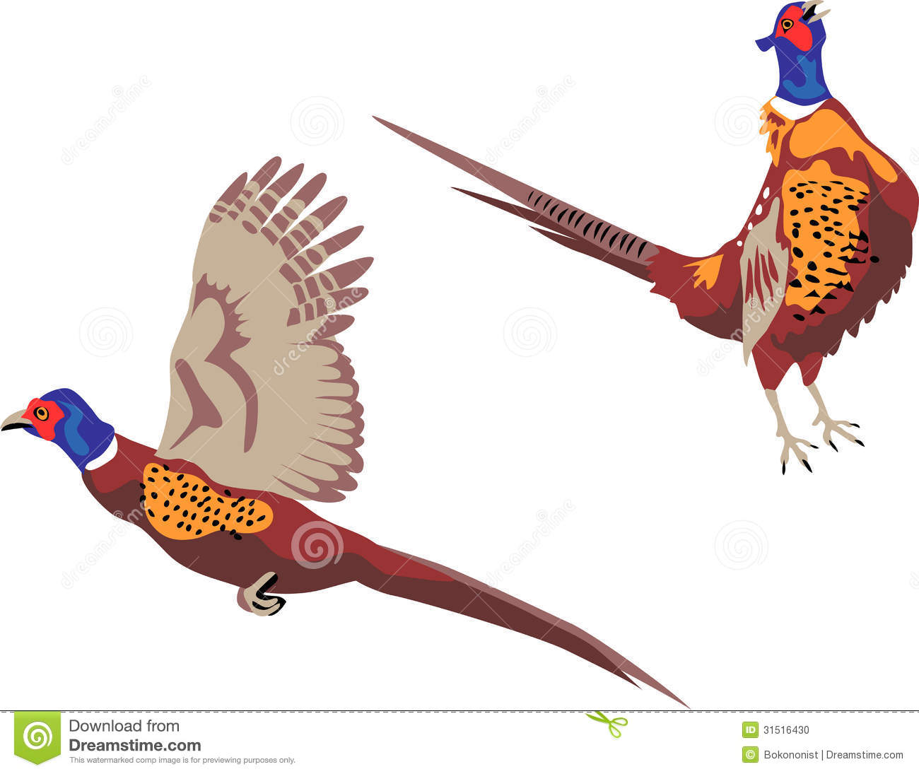 Pheasant Stock Illustrations.