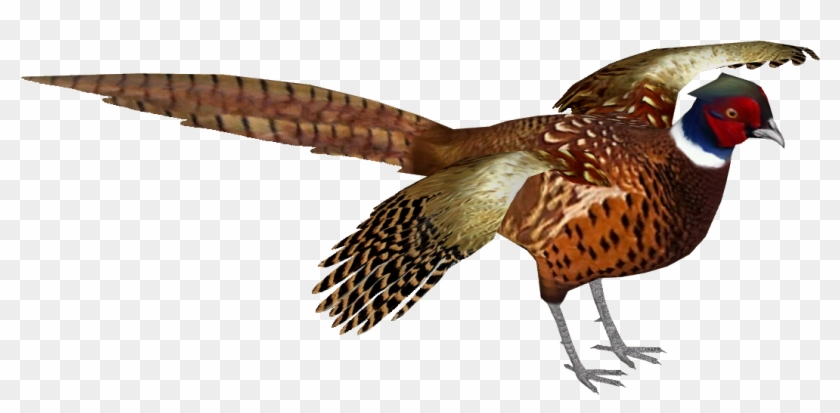 Common Pheasant 9 , Png Download.