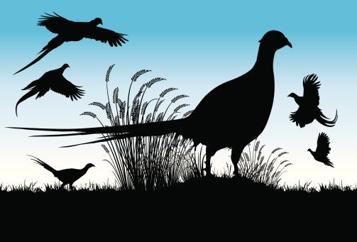 Silhouette Of A Pheasant Bird Clip Art, Vector Images.