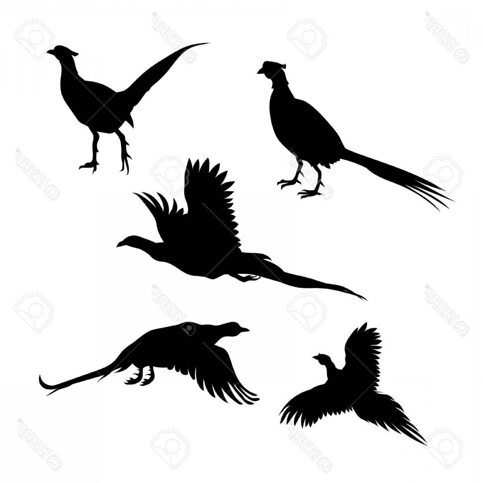Photostock Vector Bird Pheasant Vector Icons And Silhouettes.