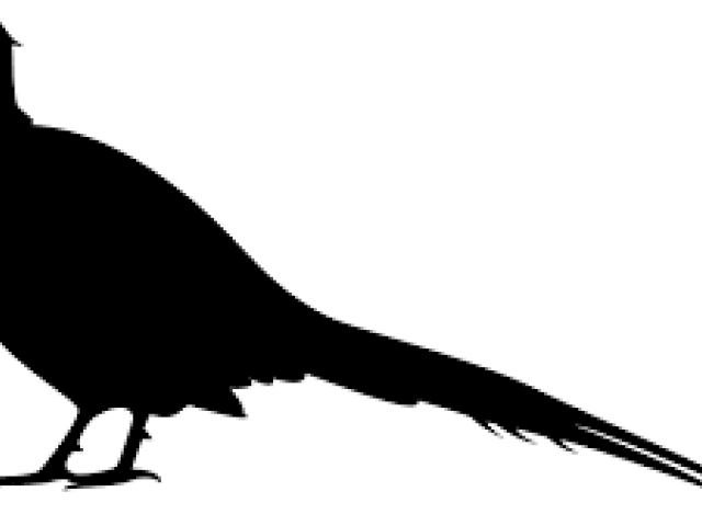 Free Pheasant Clipart, Download Free Clip Art on Owips.com.