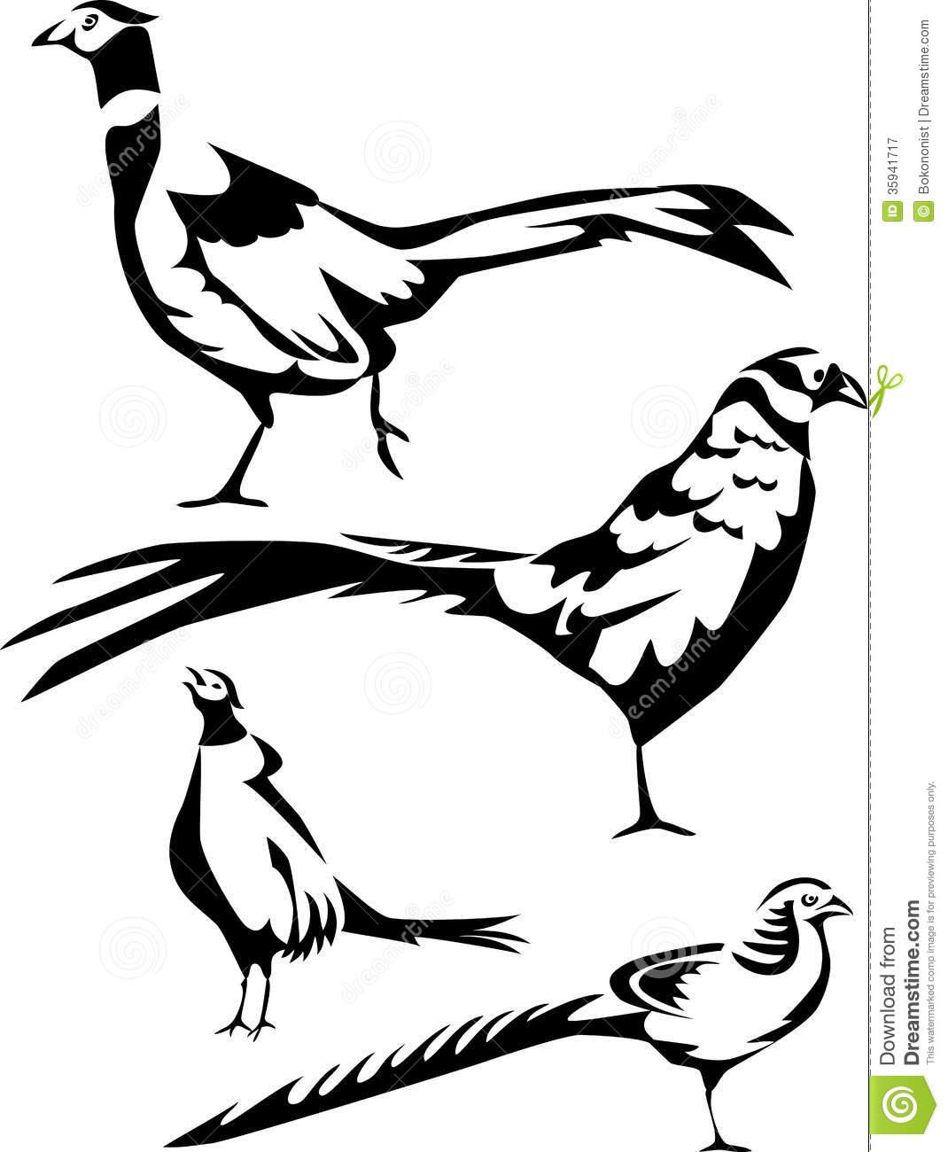 Pheasants Clip Art Line Drawings.