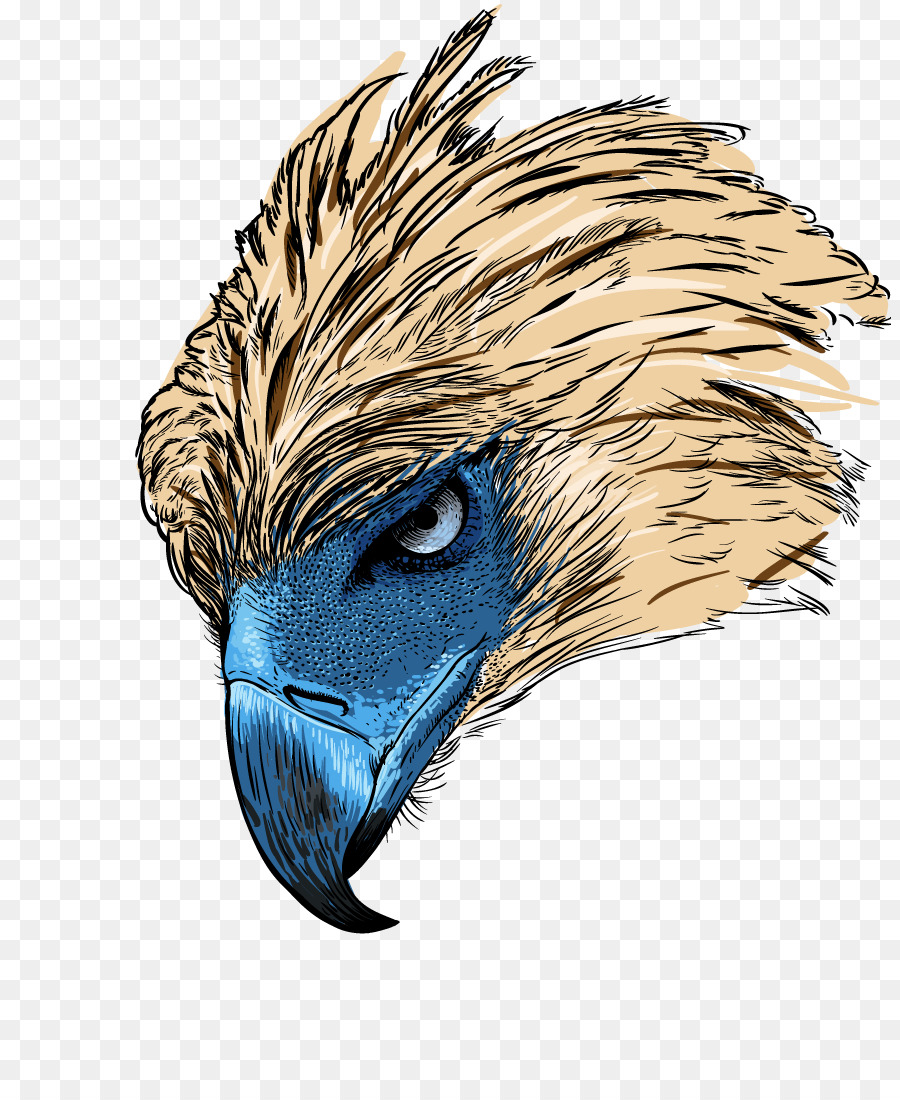 Eagle Drawing clipart.