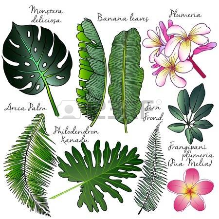 355 Philodendron Leaf Stock Illustrations, Cliparts And Royalty.