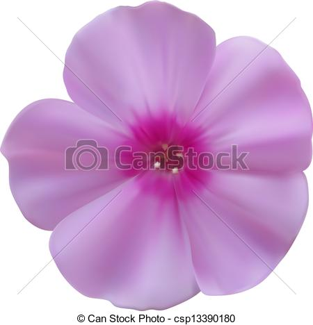 Vector of Phlox flowers isolated on white background. Vector.