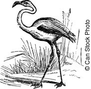 Phoenicopteridae Clipart Vector and Illustration. 11.