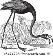 Phoenicopteridae Clip Art and Illustration. 11 phoenicopteridae.