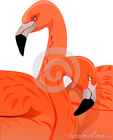 Pair Flamingos Family Phoenicopteriformes Stock Illustrations.