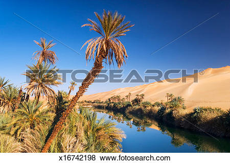 Pictures of Oasis with date palms (phoenix dactylifera) in Sahara.