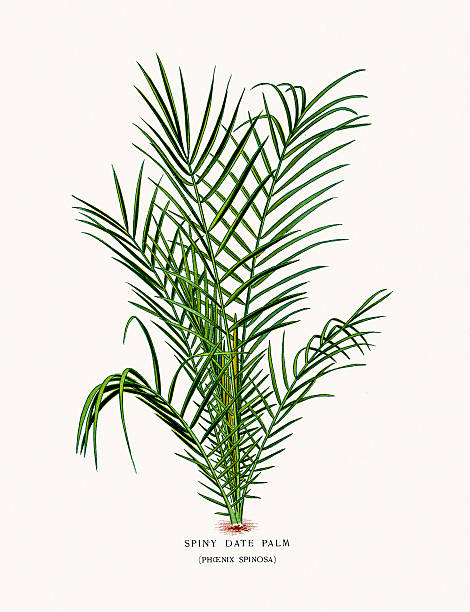 Phoenix Palm Tree Clip Art, Vector Images & Illustrations.