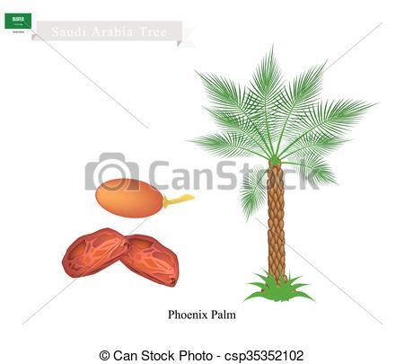 Vector Clipart of Phoenix Palm, A National Tree of Saudi Arabia.