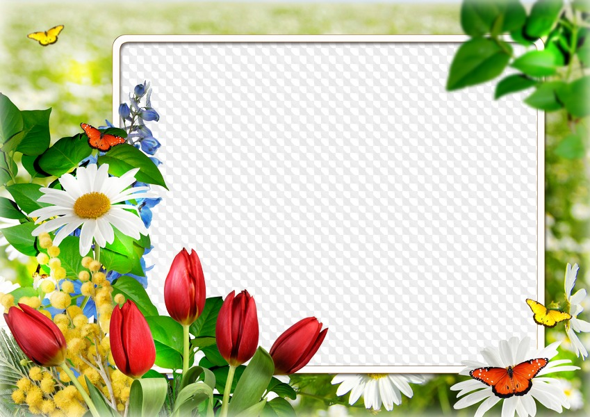 7 photo frames PNG format with beautiful flowers.