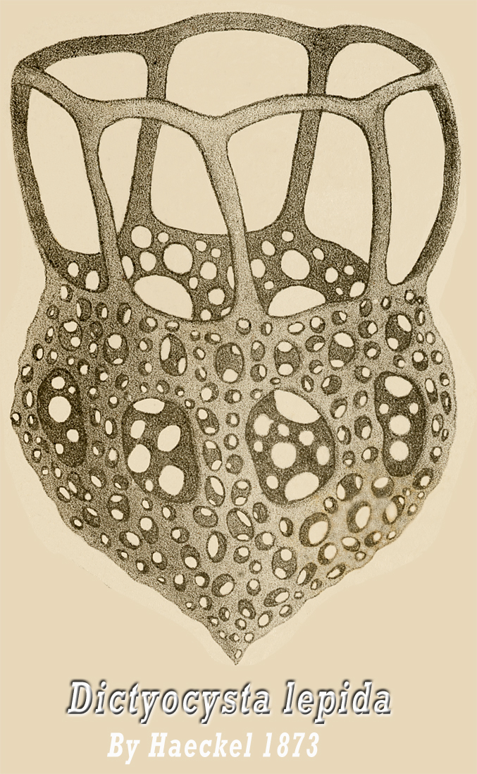 Ernst Haeckel, Kunstformen der Natur (Artforms of Nature), 1904.