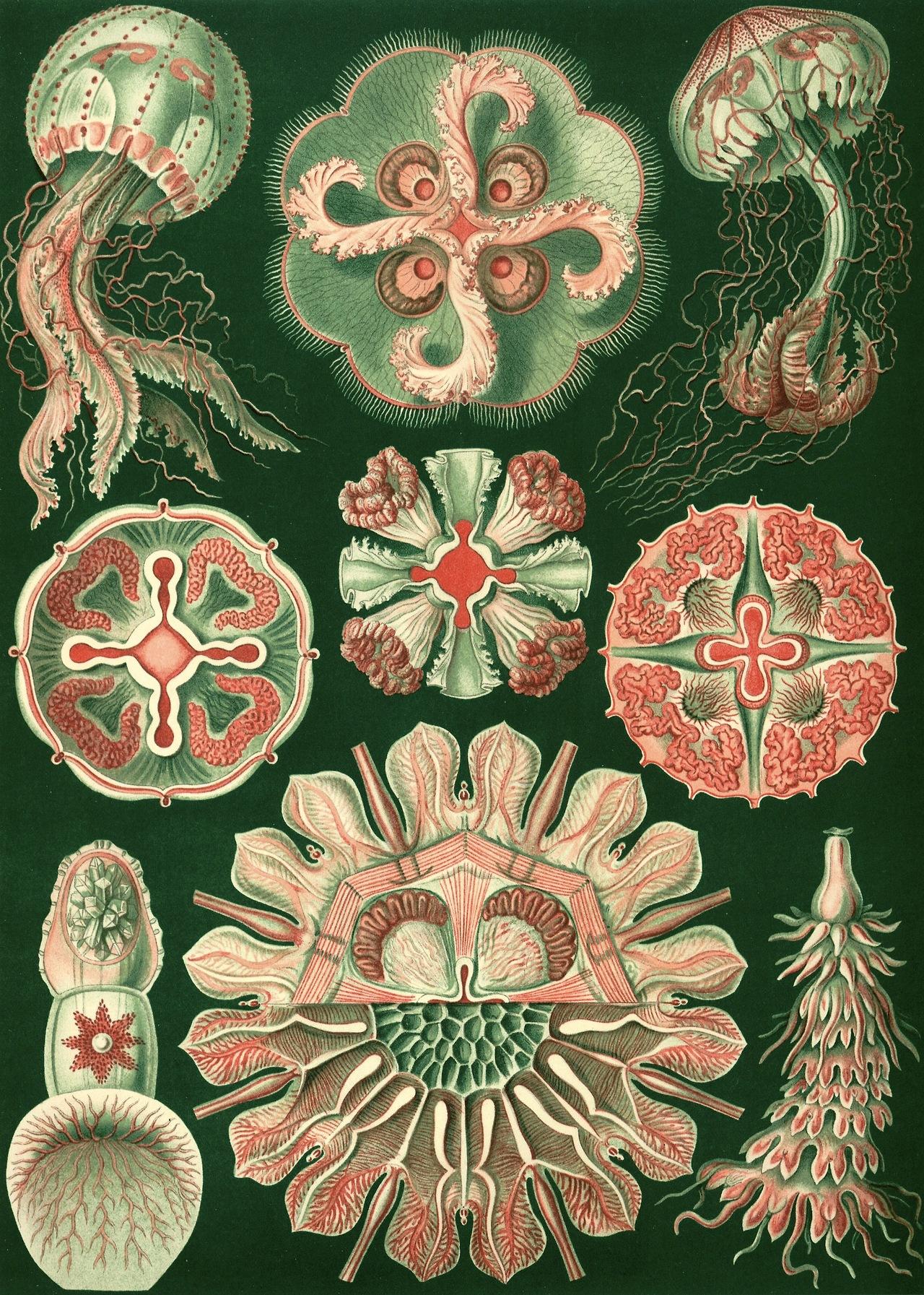 Scientific Illustration.