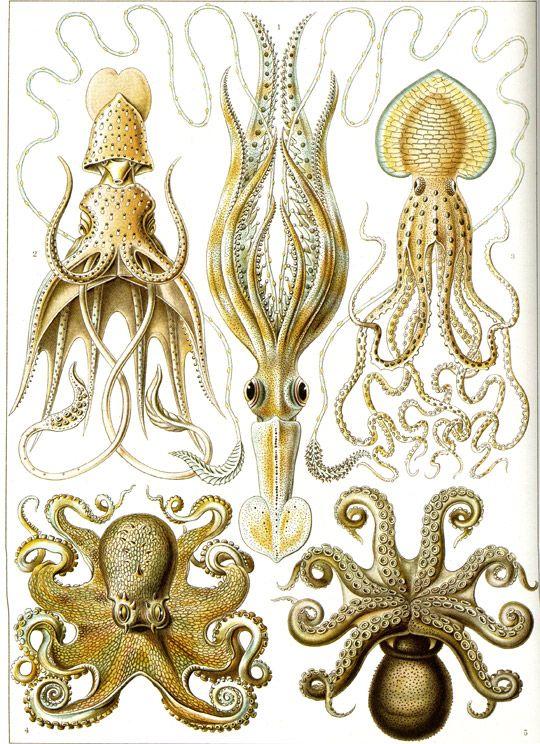 Ernst Haeckel.