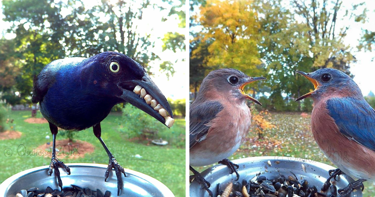This Woman Set Up A Feeder Cam For Birds In Her Yard, And.