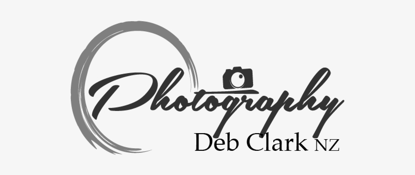 Photography Logo Png Hd Transparent PNG.