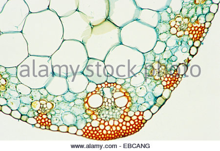 Photomicrography Stock Photos & Photomicrography Stock Images.