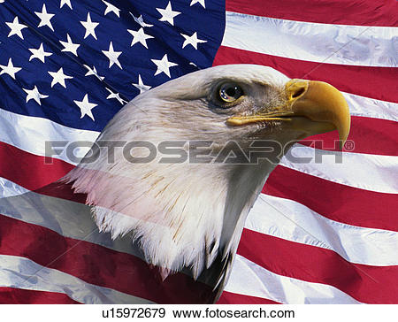 Stock Photograph of Photo montage: American bald eagle and.