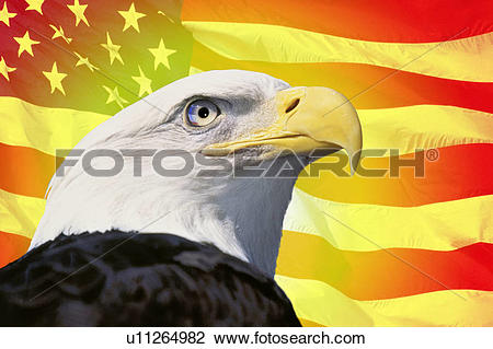 Stock Photo of Photo montage: American flag and bald eagle.