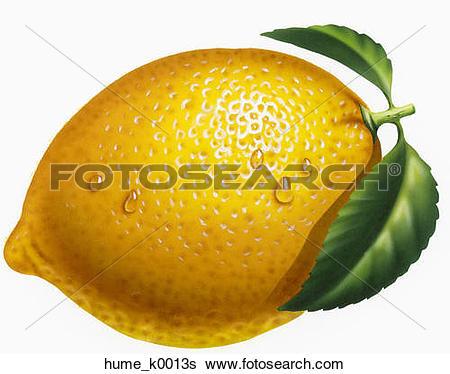 Stock Illustration of Photorealistic image of an orange.