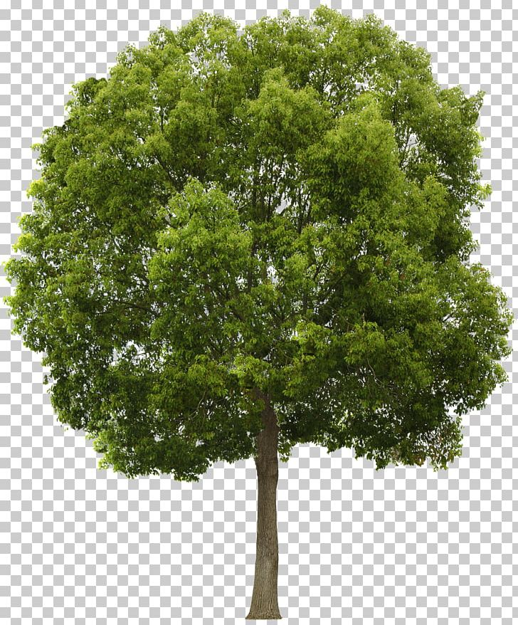 Tree Alpha Compositing PNG, Clipart, Alpha Compositing.