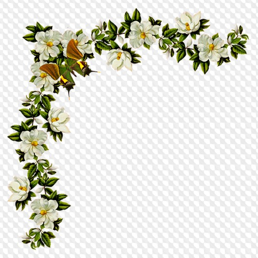 Flowers png, birds png images, clipart png on a transparent.
