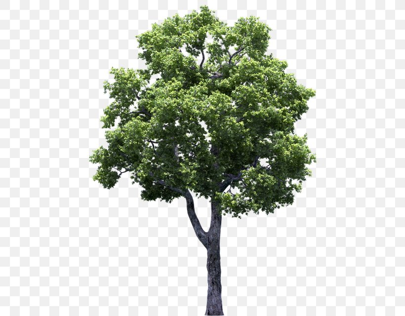 Tree Clip Art Adobe Photoshop Vector Graphics, PNG.
