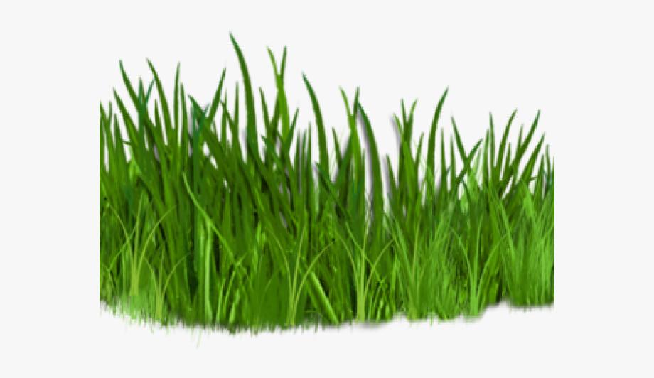 Lawn Clipart Tree Grass.