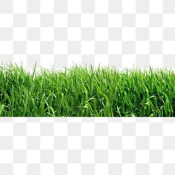 Grass PNG Images, Download 16,719 Grass PNG Resources with.