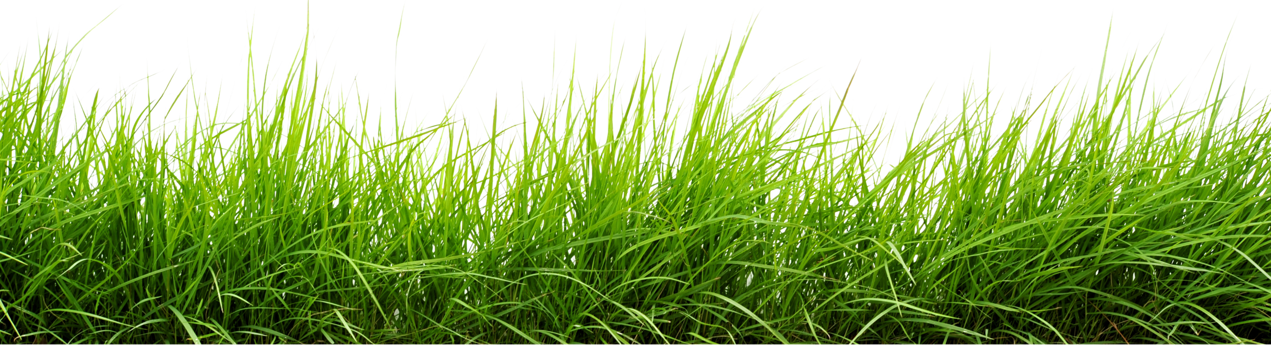 Grass PNG Transparent Grass.PNG Images..