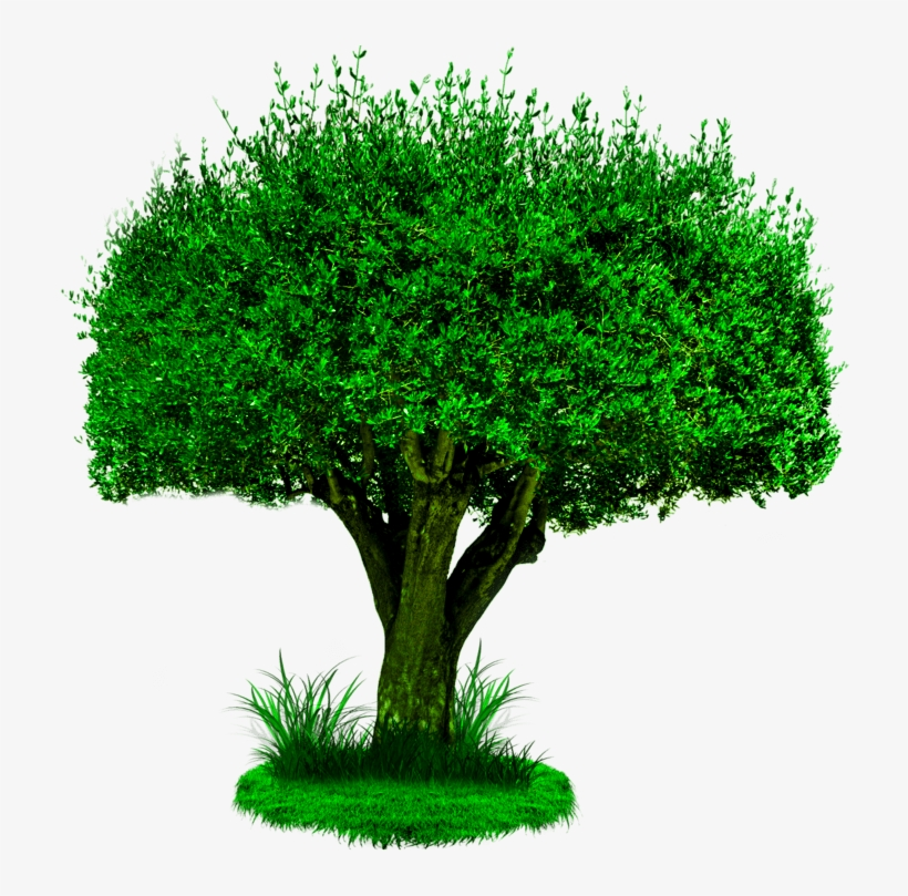 Tree Png, Photoshop Editing Png, Cb Edits Png, New.