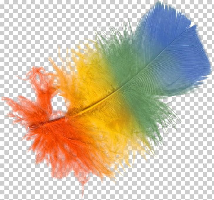 Adobe Photoshop Psd Portable Network Graphics Adobe Systems.