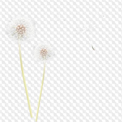 Flower Photoshop Overlays 27 High Quality PNG images Download.