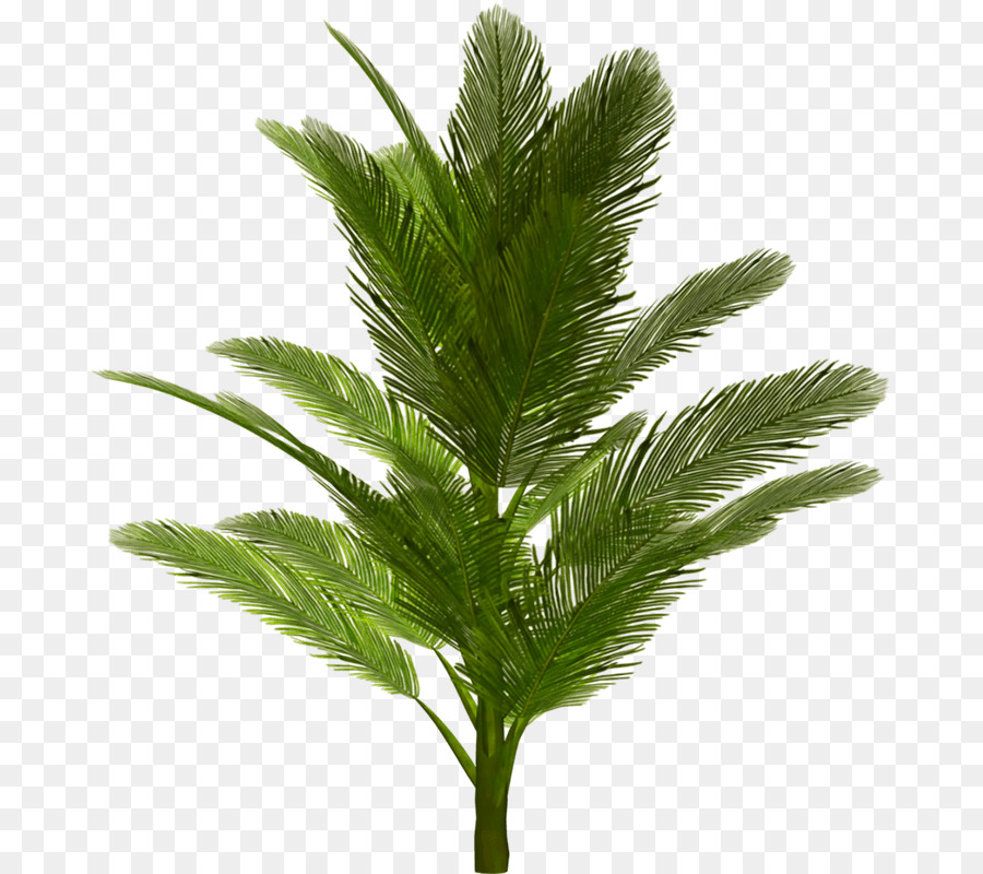 Date Tree Leaf png download.