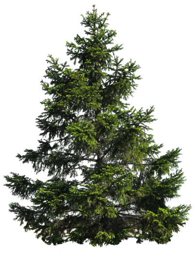 Download Free png PINE TREE PNG by Moonglowlilly on.