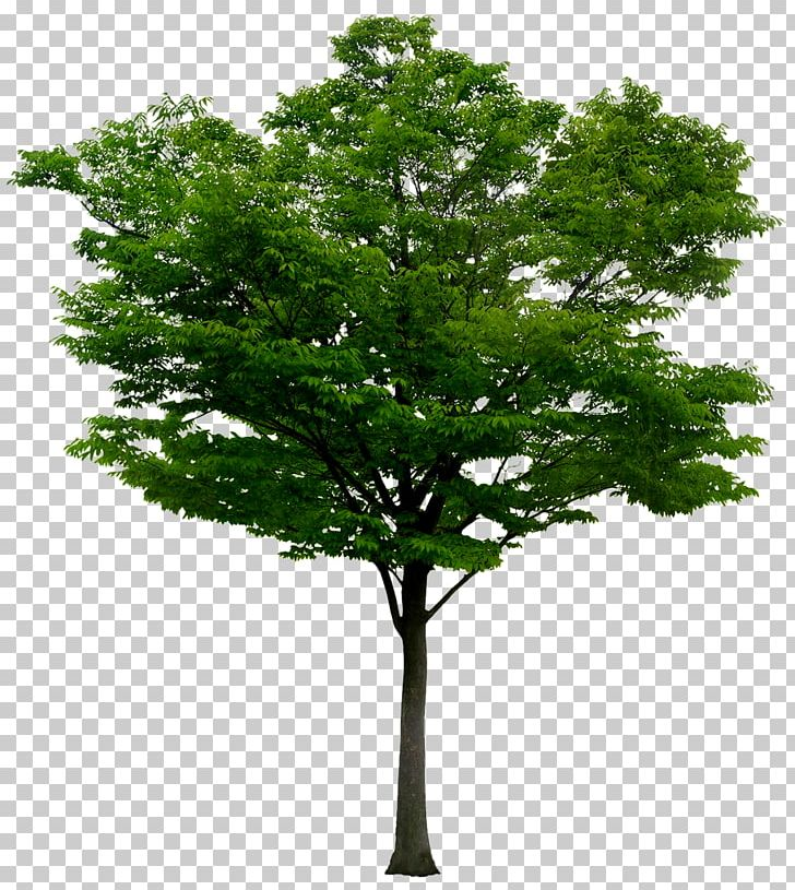 Adobe Photoshop Portable Network Graphics Psd Tree PNG.