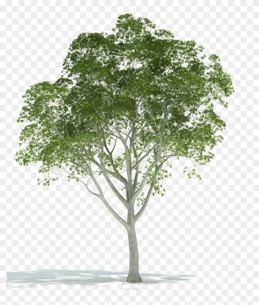 Realistic Tree Png Image Background.