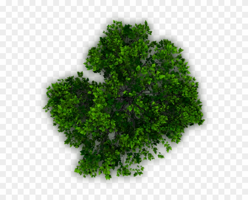 Trees In Plan For Photoshop, HD Png Download (#615855), Free.
