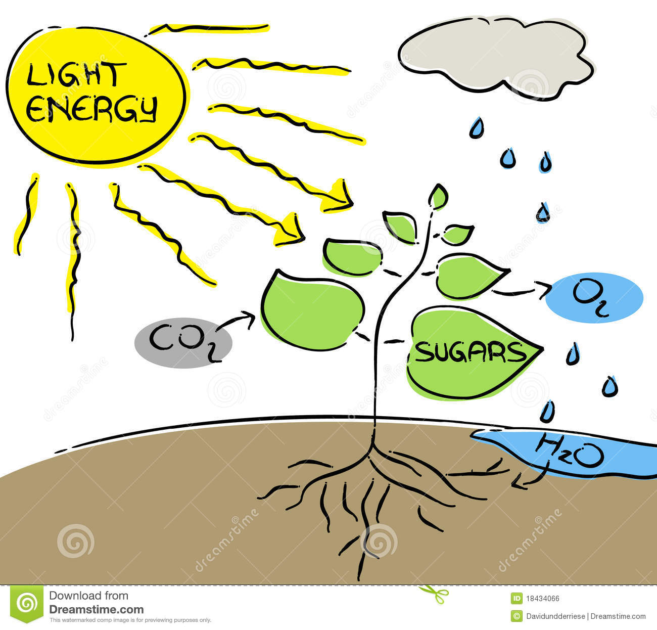 Photosynthesis. Royalty Free Stock Image.