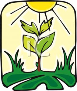 Clipart of Photosynthesis.