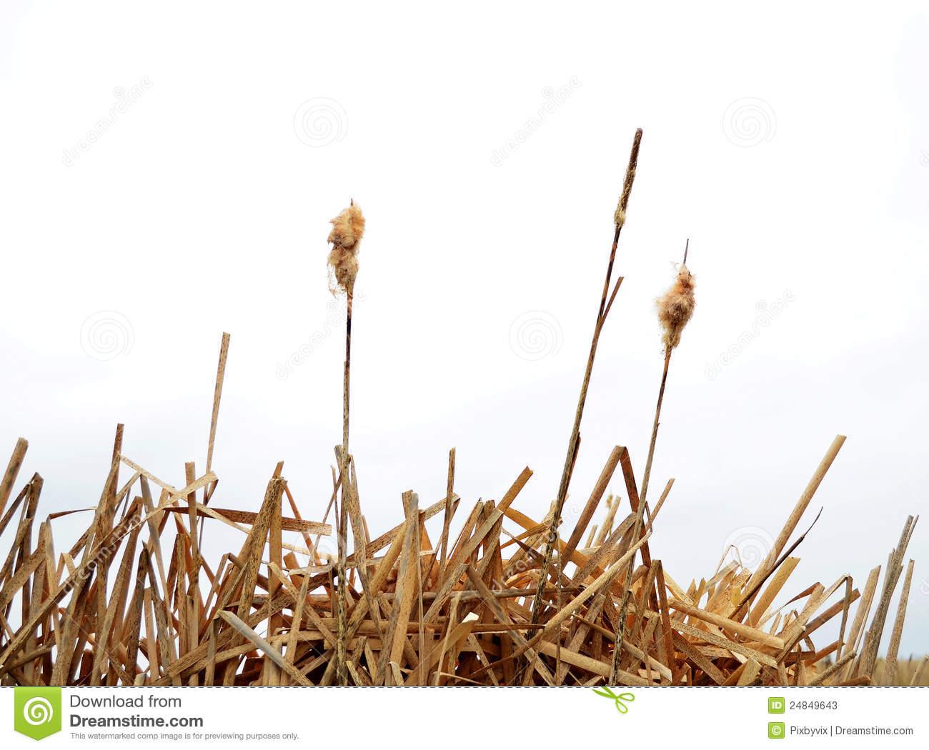 Marsh Grass Clipart.
