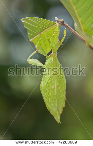 Closeup Shot Of A Leaf.