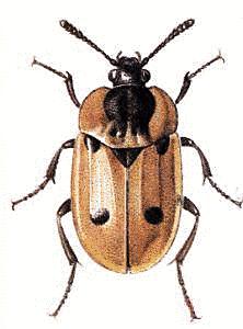 Bugs Clip Art Download.