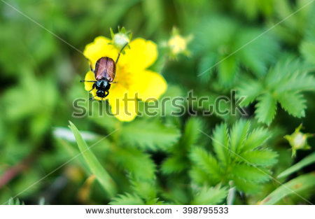 Garden Foliage Beetle Stock Photos, Royalty.