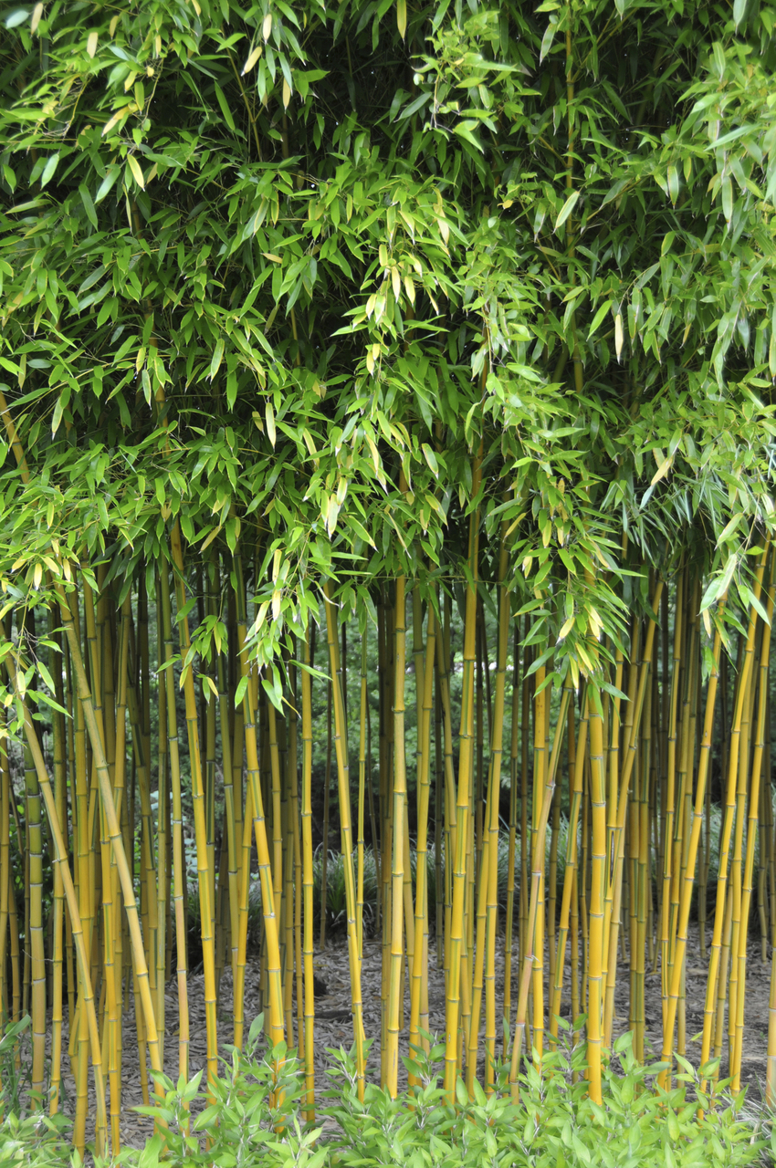 1000+ images about ALL THINGS BAMBOO: BAMBOO TRAILS & PATHS on.