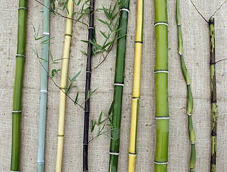 1000+ images about BAMBU Y GUADUA on Pinterest.