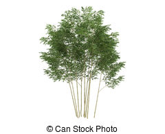 Phyllostachys Illustrations and Clip Art. 4 Phyllostachys royalty.