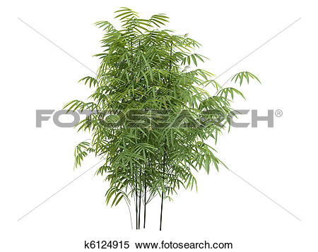 Stock Illustration of Golden fishpole bamboo or Phyllostachys.