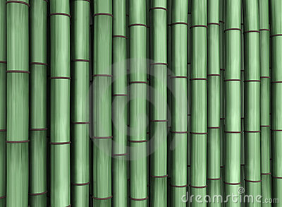 Phyllostachys Stock Illustrations.
